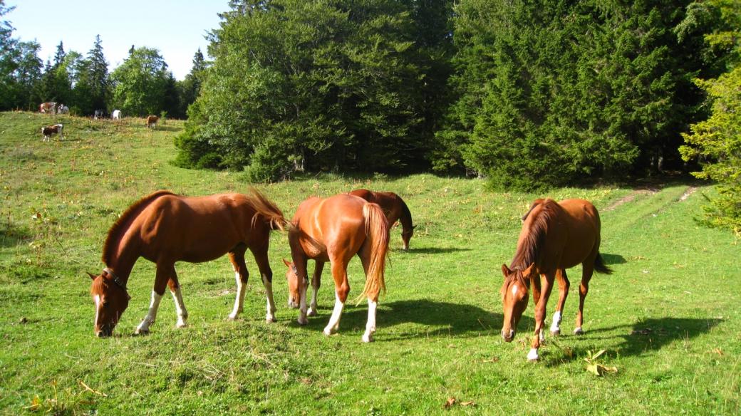 A proximité du Bois des Croisettes - Vaud - Suisse