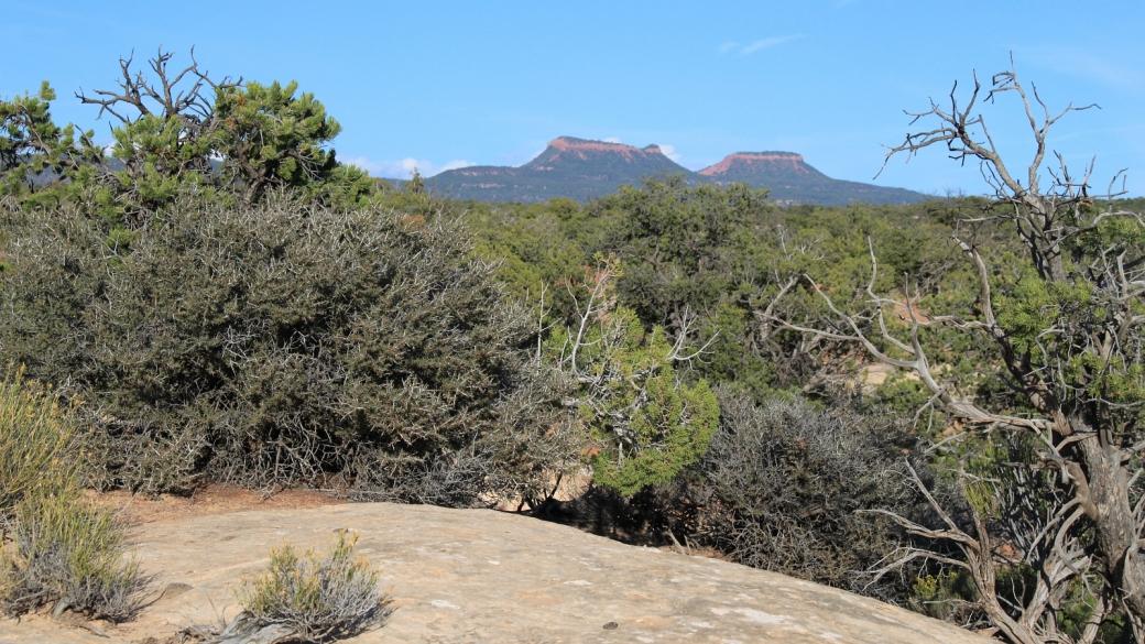 Au loin, les Bear Ears, montagne sacrée des Navajos.