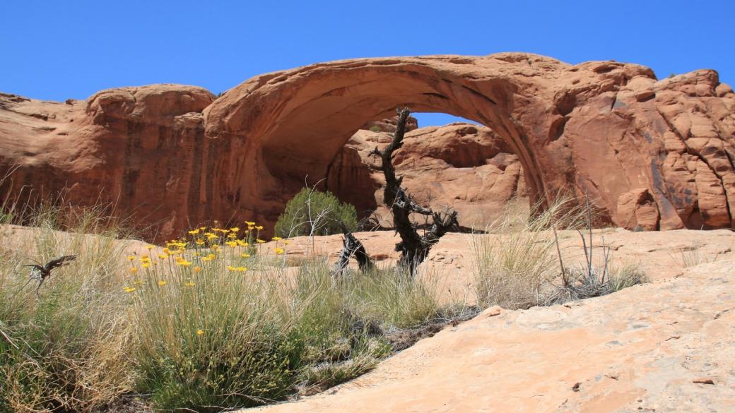 Pritchett Arch, magnifique et immense. Elle se trouve à proximité de Moab, dans l'Utah.