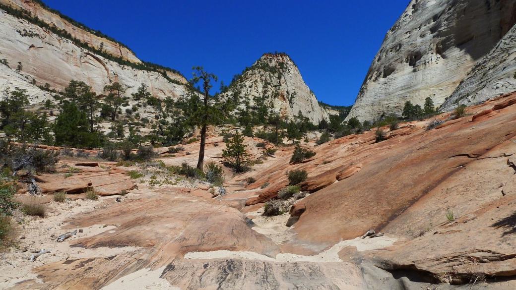 Du côté de la Checkboard Mesa, dans un canyon latéral. À Zion National Park, dans l'Utah.