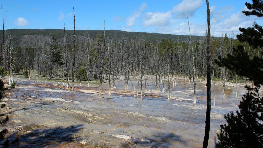 "Bobby socks trees, à savoir des ""arbres avec des socquettes blanches"". Upper Geyser Basin, à Yellowstone National Park."