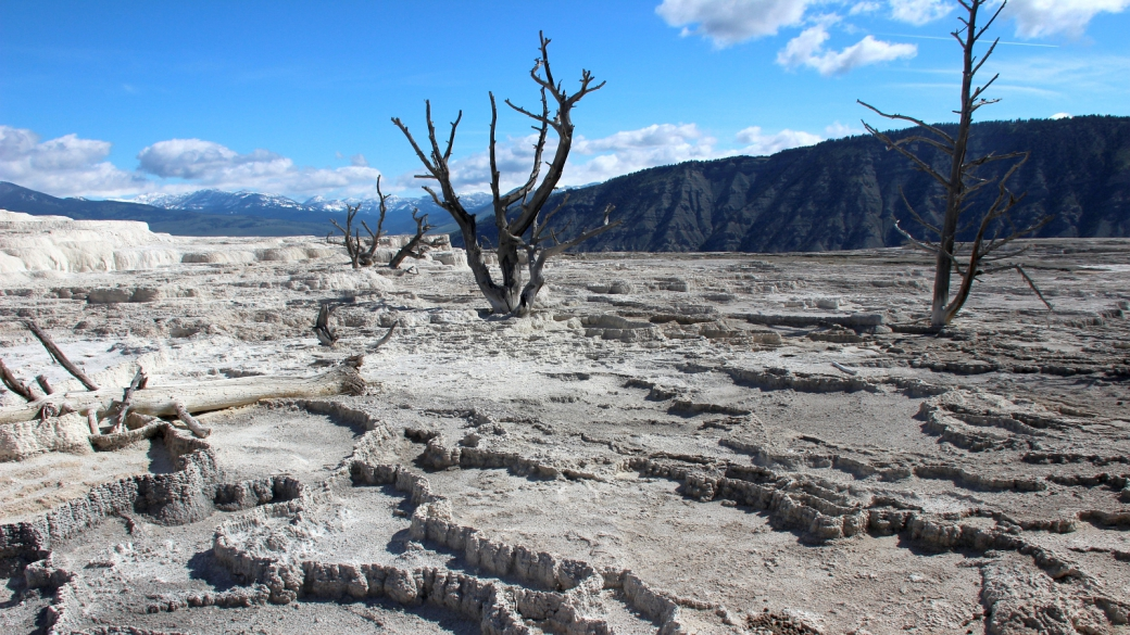 En allant vers Canary Spring, à Mammoth Hot Springs, Yellowstone National Park.