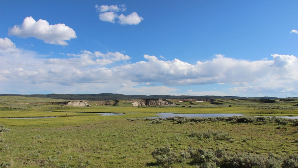 Autre vue sur Hayden Valley, cette immense prairie que parcourt la Yellowstone River. À Yellowstone National Park.