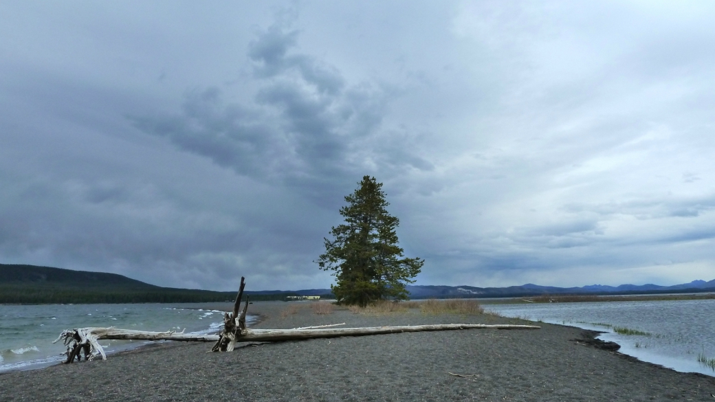 Gull Point, sur le bord du lac Yellowstone, pas loin de Bridge Bay Marina. À Yellowstone National Park.