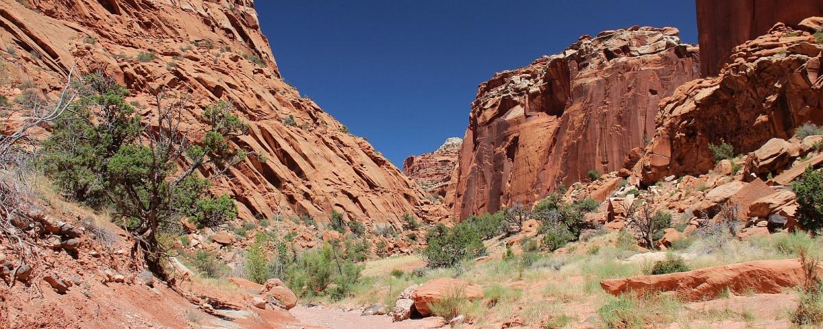 Spring Canyon
