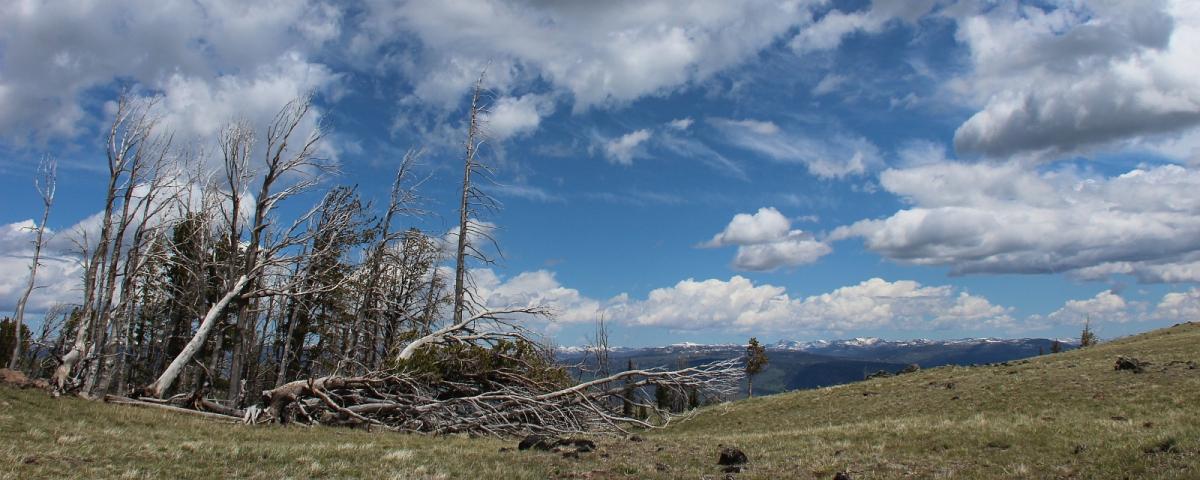 Sur la Chittenden Road à proximité du sommet du Mount Washburn, à Yellowstone National Park.
