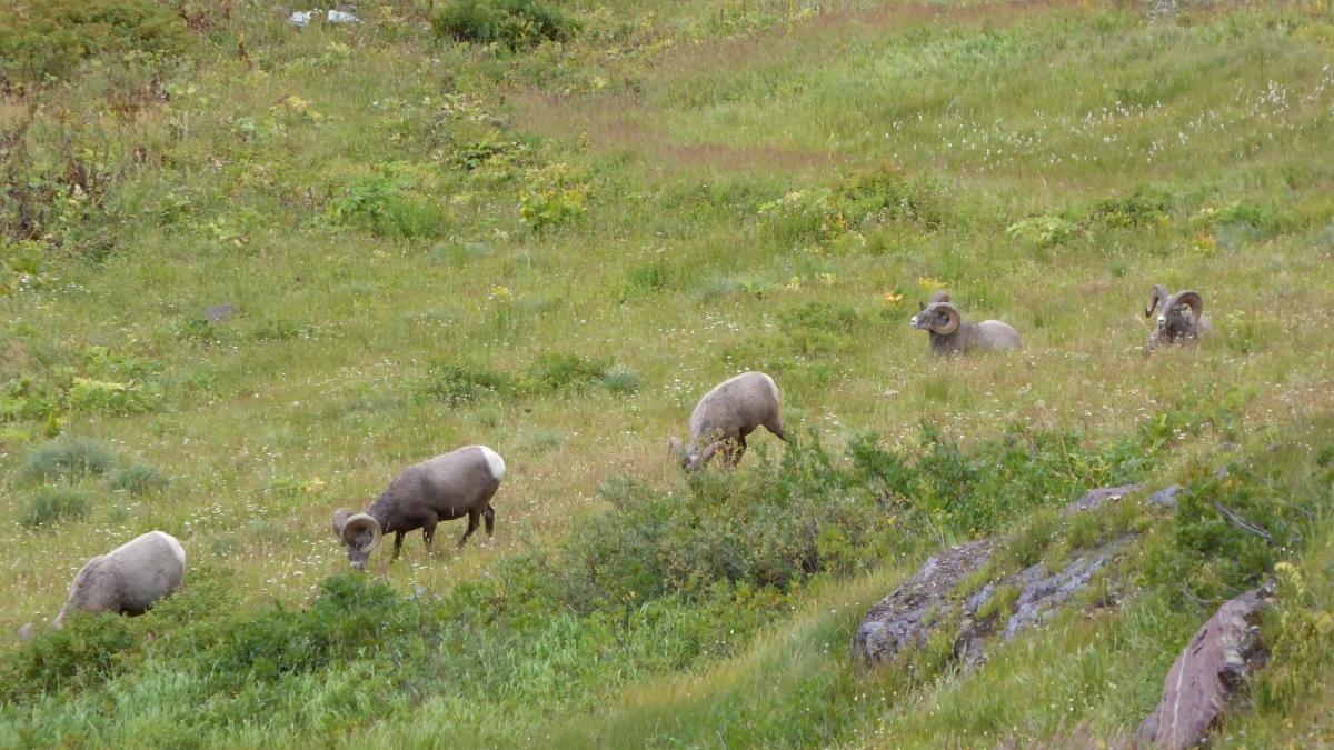 Grinnell Lake trail - Glacier National Park - Montana