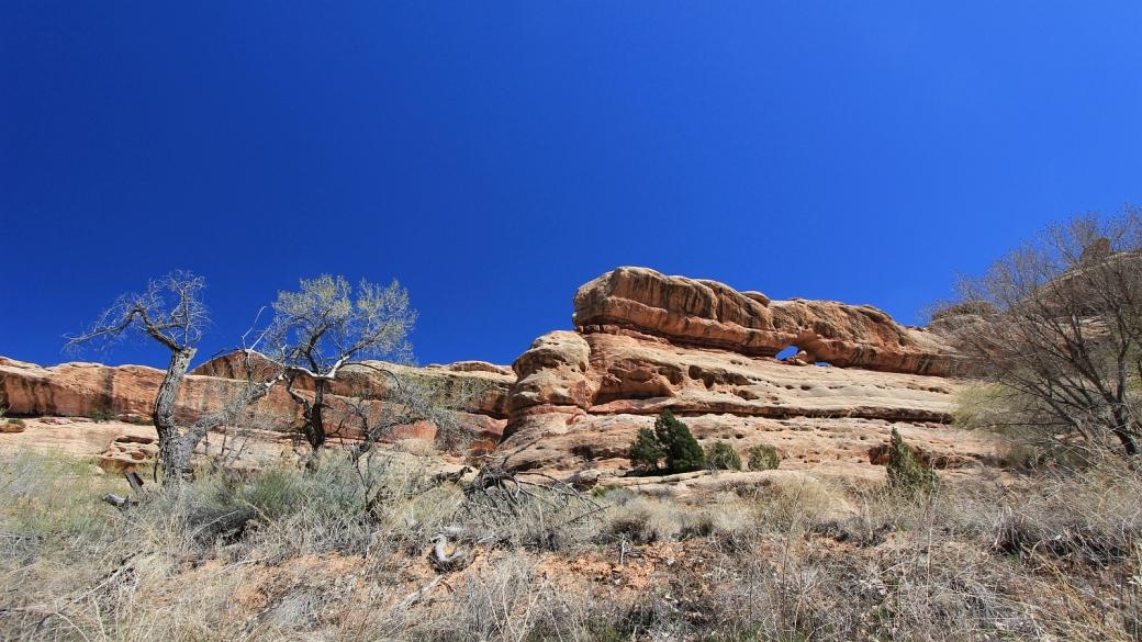 Polly Canyon - Cedar Mesa - Utah