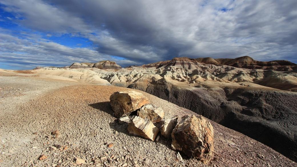 Restes de tronc pétrifié sur le Blue Forest Trail, à Petrified Forest National Park, Arizona.