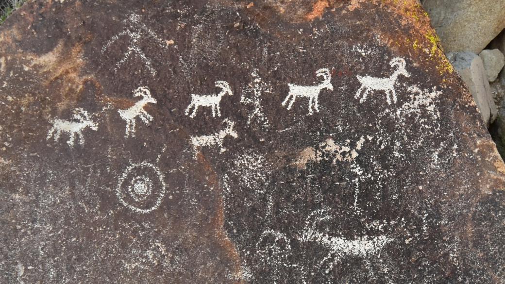 Cortège de chèvres à Grapevine Canyon, près de Laughlin, au sud du Nevada.