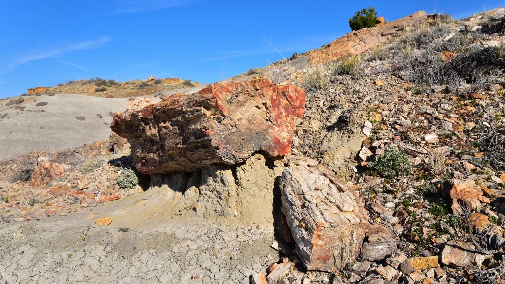 Joli tronc pétrifié à De-Na-Zin Wilderness, près de Bloomfield, au Nouveau-Mexique.