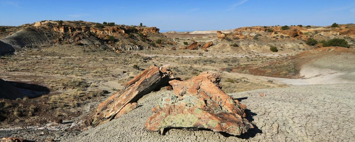 Troncs pétrifiés à De-Na-Zin Wilderness, près de Bloomfield, Nouveau-Mexique.