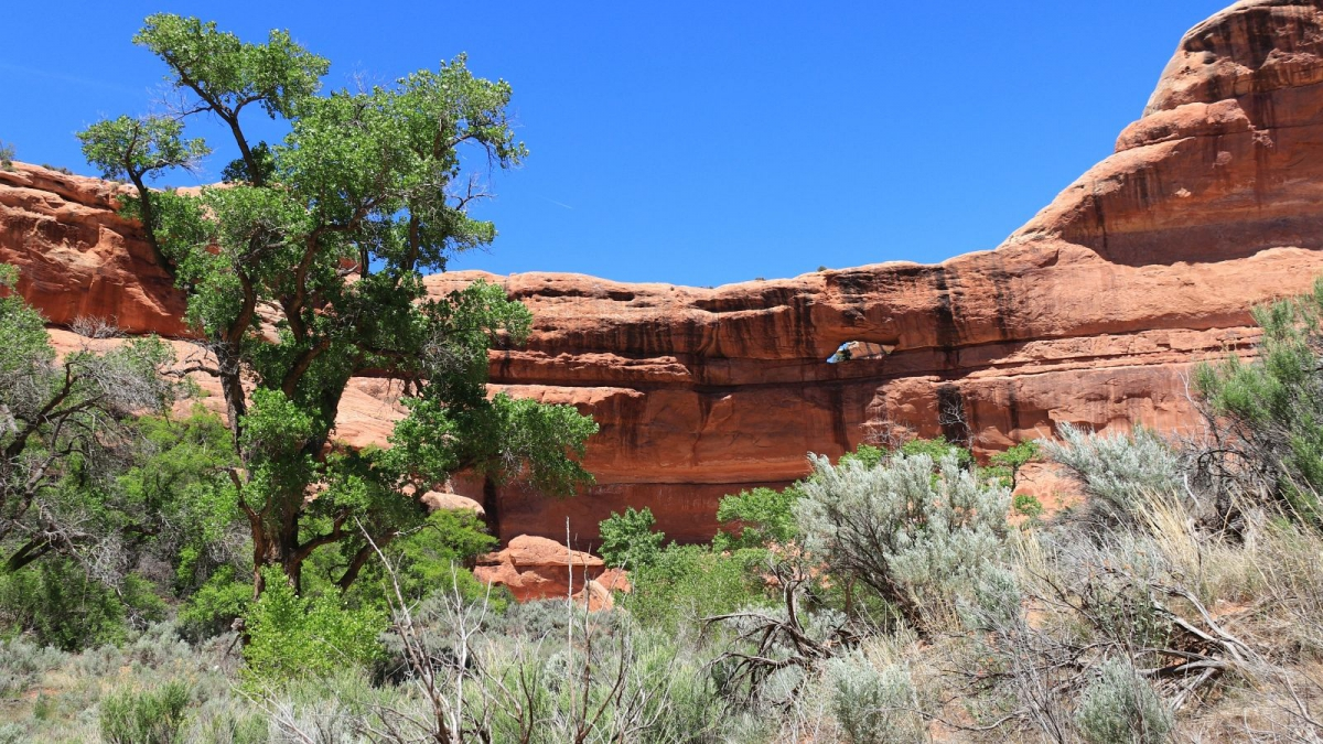Stimper Arch - Grand Gulch - Cedar Mesa - Utah