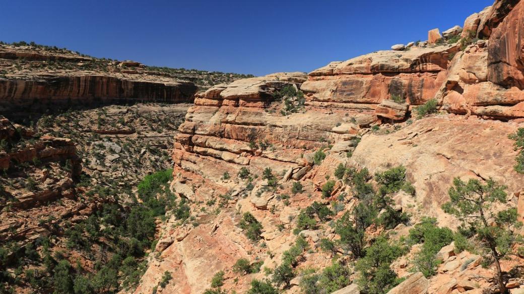 Vue sur le First Fork of Slickhorn Canyon. Cedar Mesa, près de Blanding, Utah.