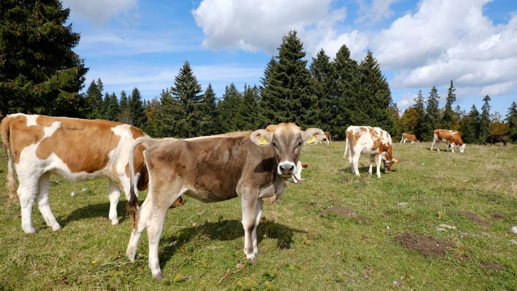 Petit Pré de Rolle - Vaud - Suisse