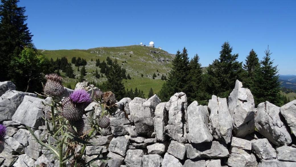 Au loin, La Dôle, et, en avant-plan, un joli mur en pierre sèche.