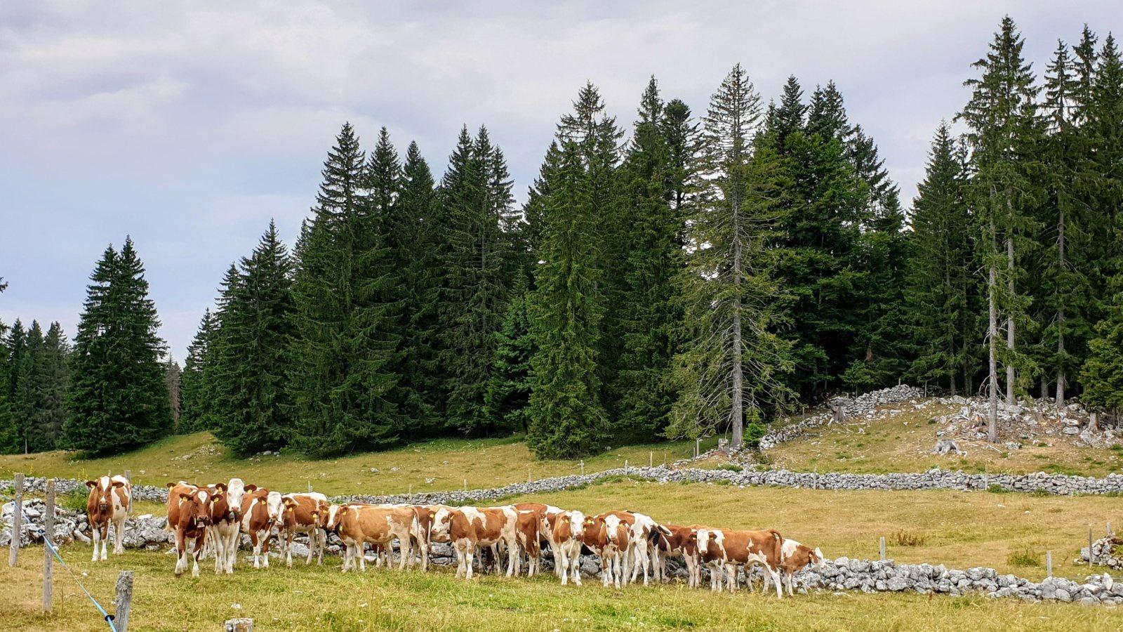 Couvert ouest de Lande Dessus - Le Chenit - Vaud - Suisse