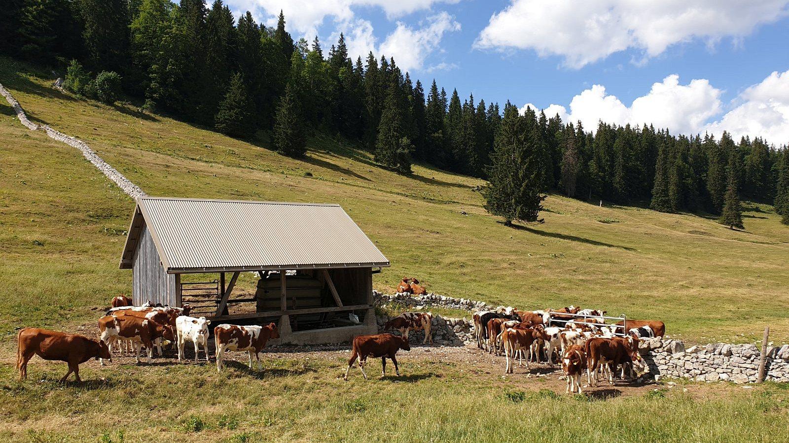 Couvert des Bégnines - Arzier-Le Muids - Vaud - Suisse