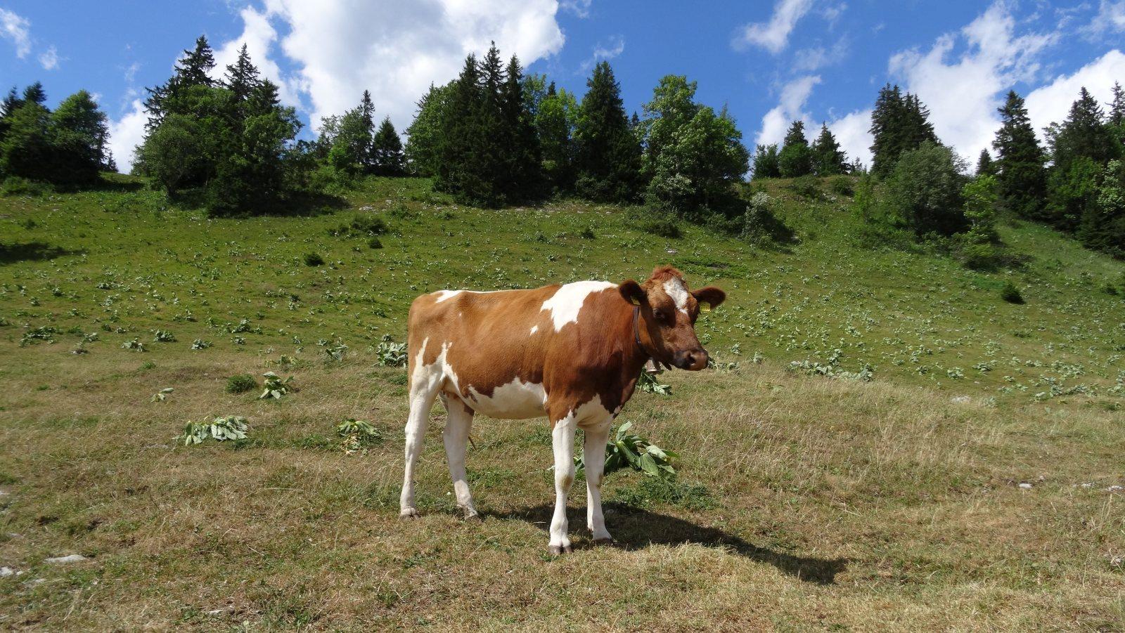 Les Bégnines - Arzier-Le Muids - Vaud - Suisse