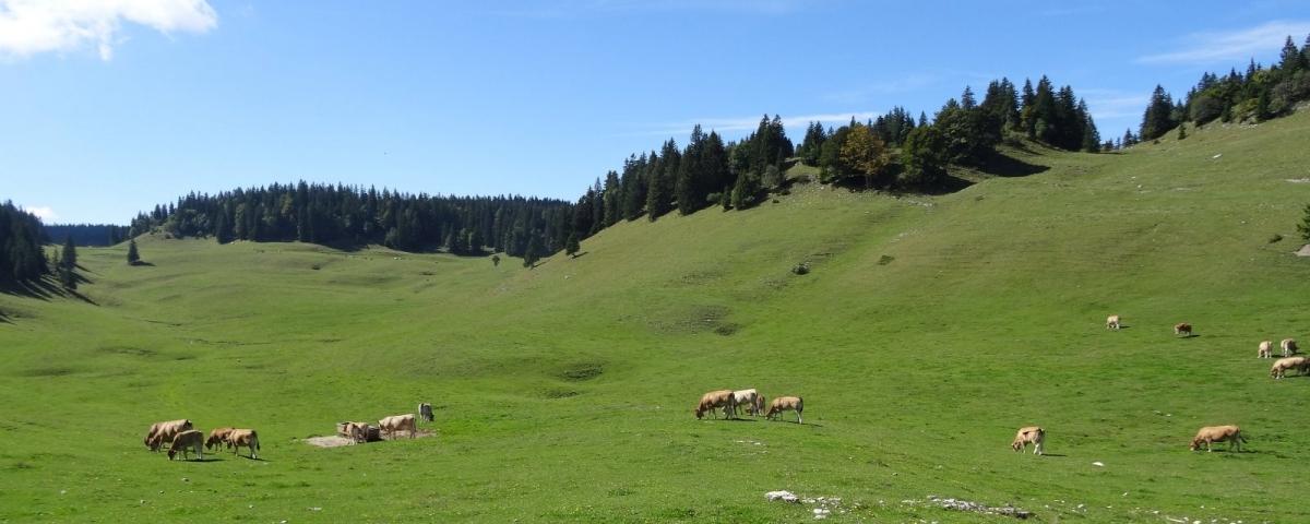 Les superbes paysages du Jura vaudois.