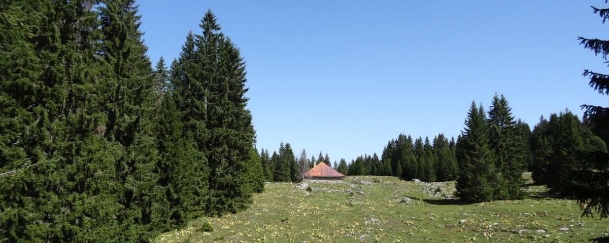 Bois de la Baragne