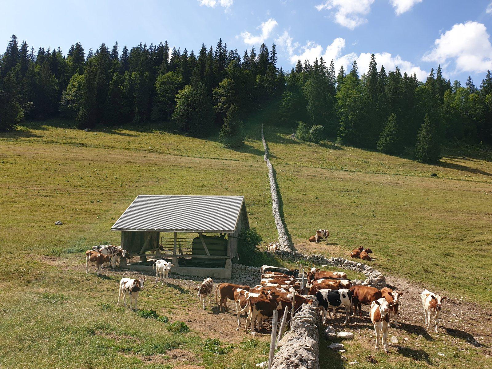 Couvert des Begnines – Arzier-Le Muids – Vaud – Suisse