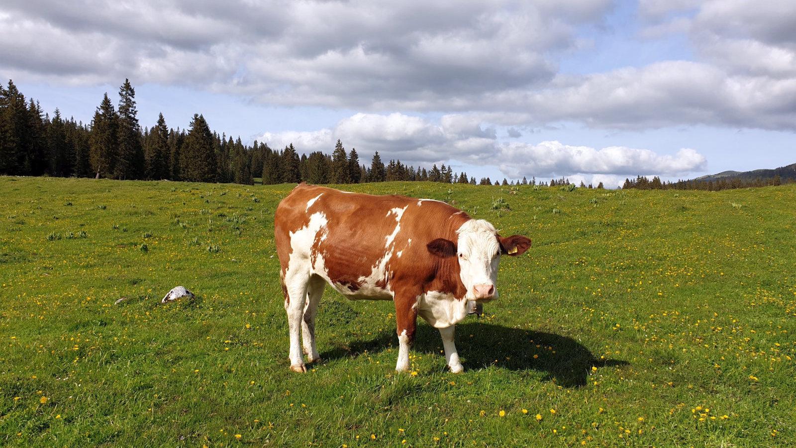 Couvert de La Plateforme – Le Chenit – Vaud – Suisse