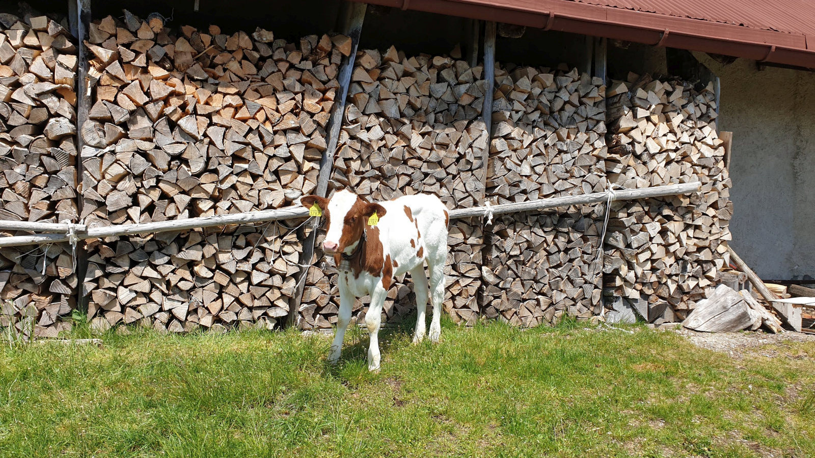 Pré de Mollens – Mollens – Vaud – Suisse