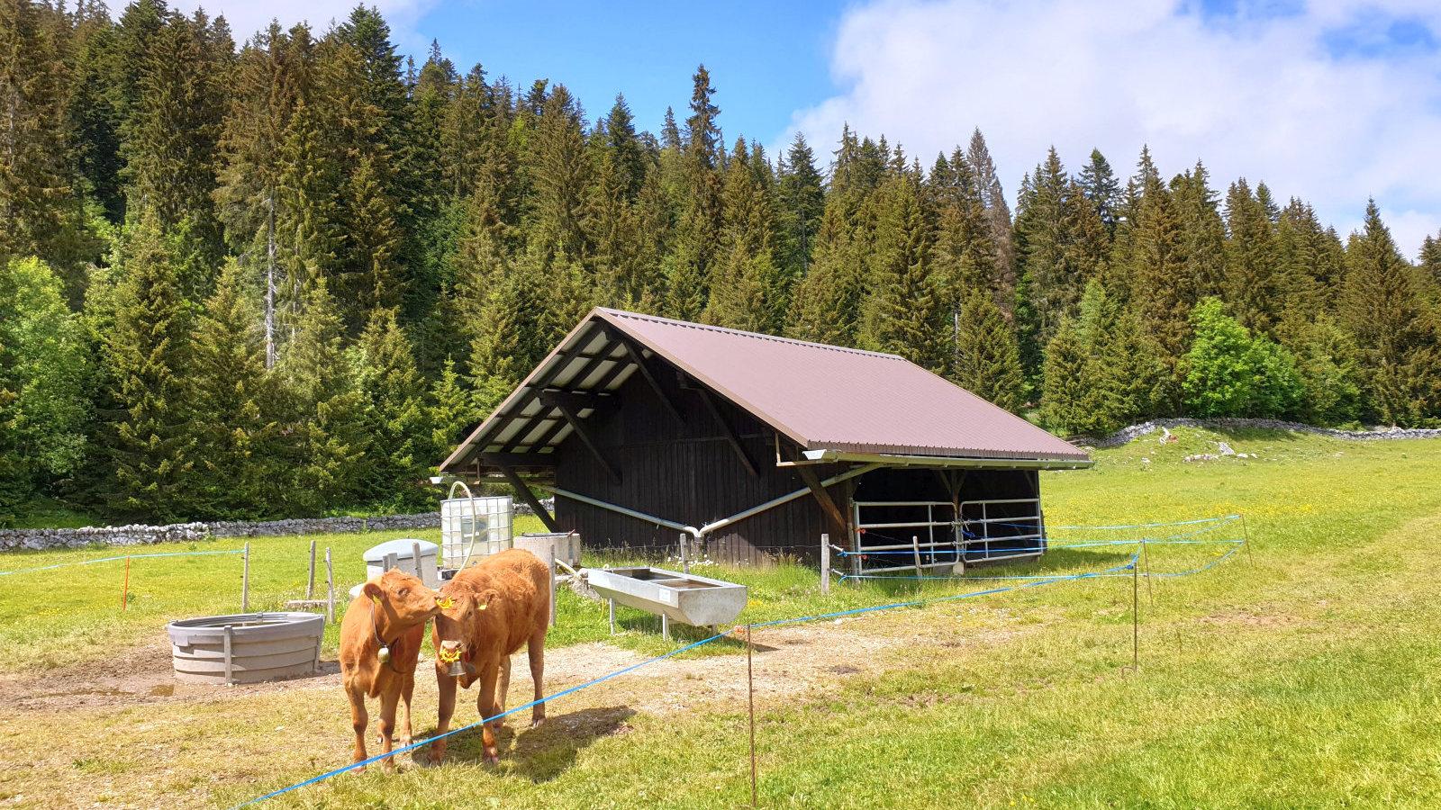 Couvert du Pré de Rolle – Saint-George – Vaud – Suisse